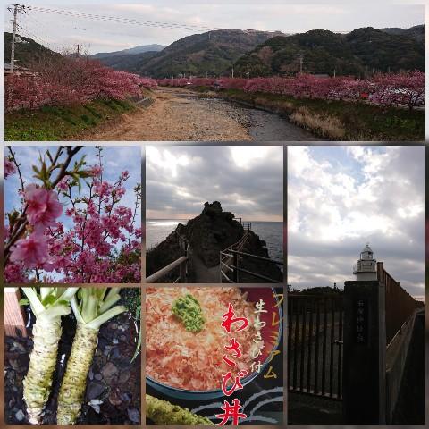 桜と先っぽとワサビ